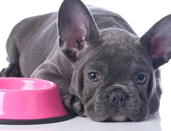 愛犬がドッグフードを食べないときの対処方法と理由