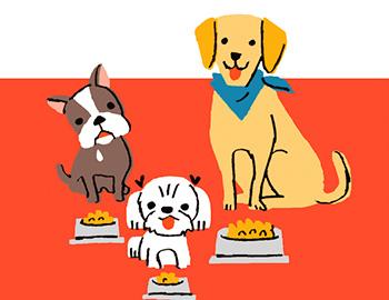 犬種別ドッグフードの選び方