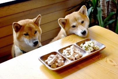 安心なドッグフードの選び方とは