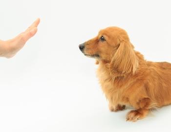 これだけは知っておくべき!犬が絶対に食べてはいけない食べ物まとめ